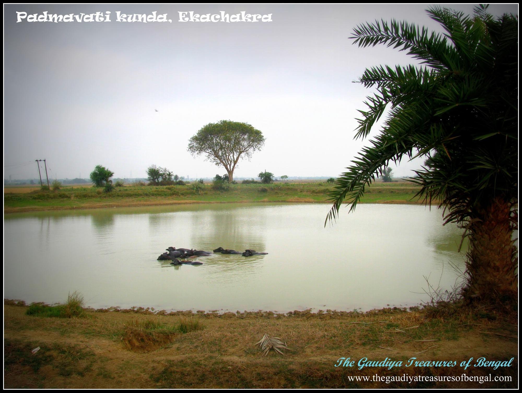 padmavati kunda ekachakra