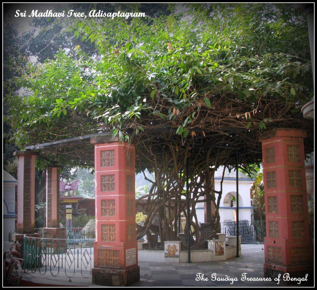 Uddharana Datta madhavi adisaptagram